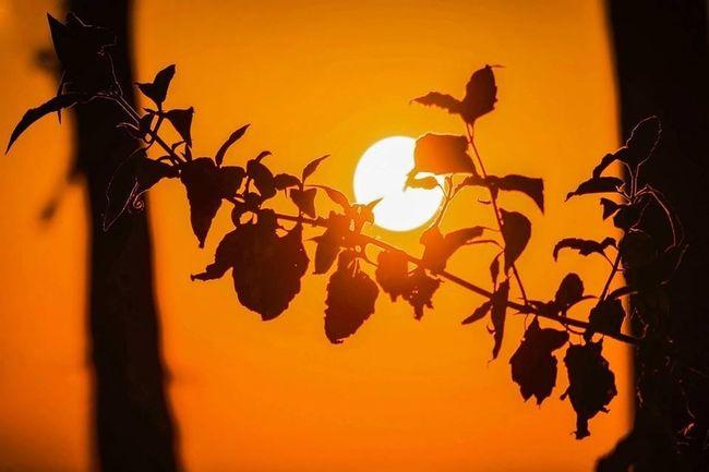 Copyright: GOD! Nature_collection EyeEm Best Shots Sunset_collection Sunset #sun #clouds #skylovers #sky #nature #beautifulinnature #naturalbeauty #photography #landscape