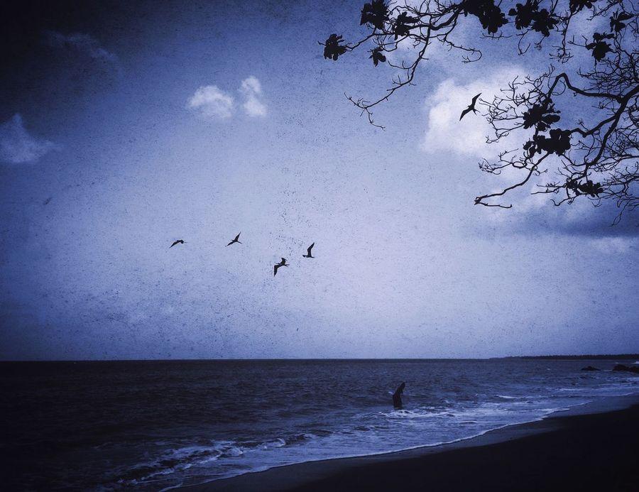 Fine Art Photography IPhoneography Mextures Beach Mood Blue Silhouette Nature Gloomy Birds Art Monochrome