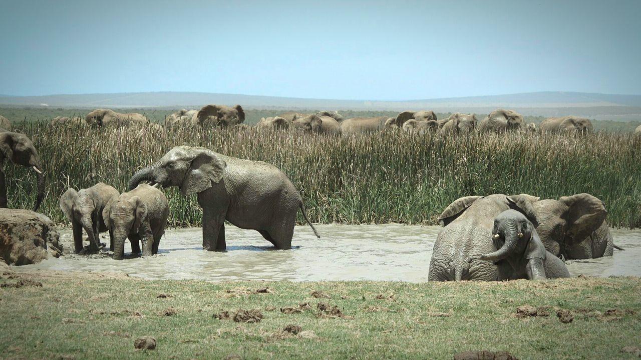 Beautiful stock photos of bad, Animal Family, Animal Themes, Animal Wildlife, Animals In The Wild