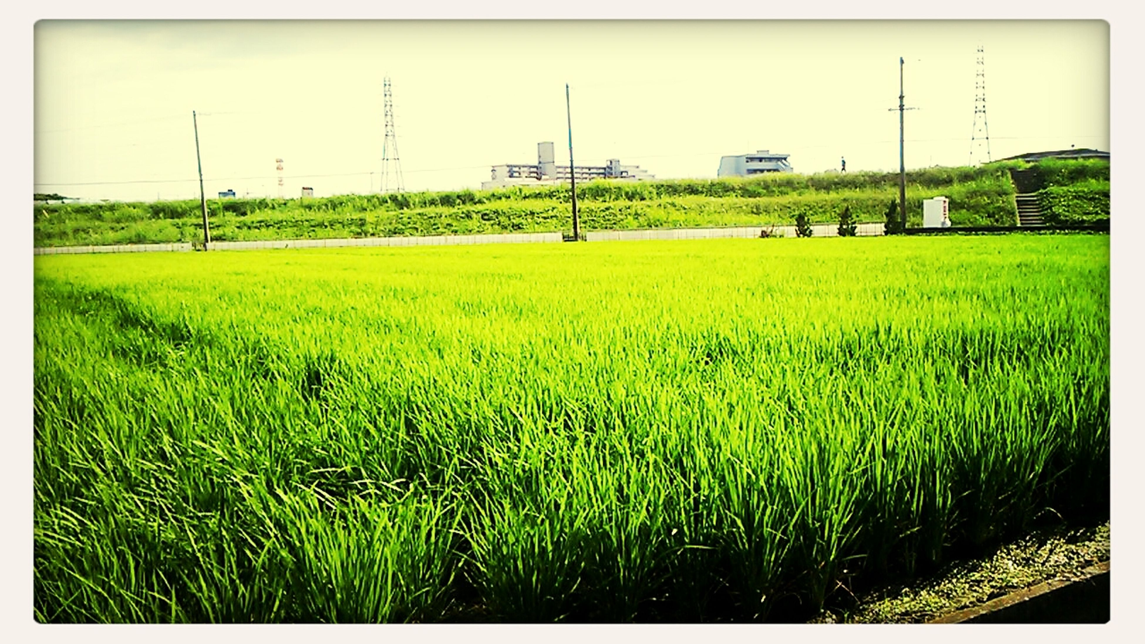 field, transfer print, agriculture, rural scene, farm, grass, landscape, crop, growth, auto post production filter, clear sky, green color, cultivated land, nature, fuel and power generation, tranquility, tranquil scene, grassy, sky, plant