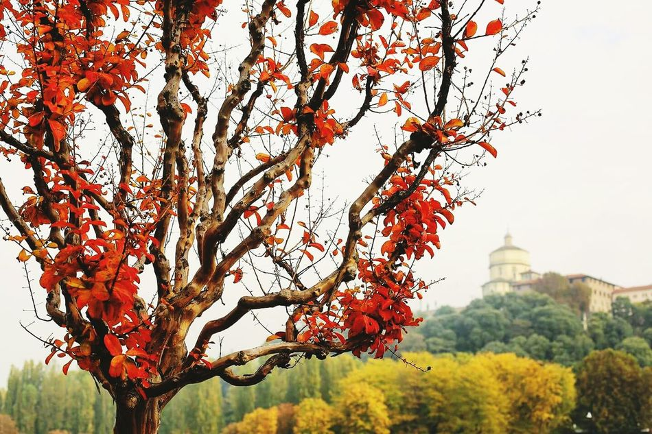 Superga (To) Architecture Tree Building Exterior Built Structure Turin EyeEm Nature Lover Green Color Autumn Colours Church Red