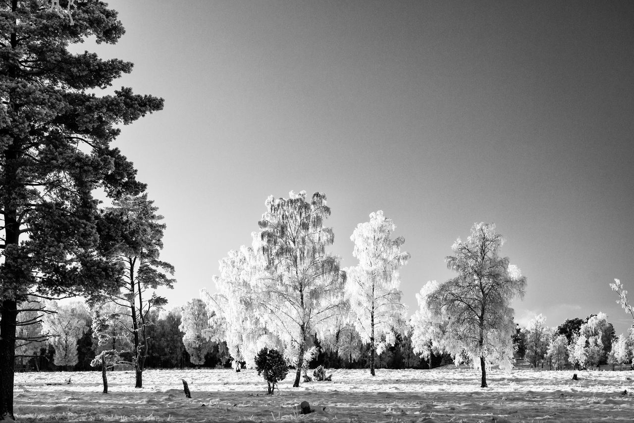Winter landscape (bnw version) - Tree Nature Clear Sky Outdoors Beauty In Nature Sky Winter Tranquility Tranquil Scene Scenics Monochrome Photography Monochrome Hello World First Eyeem Photo Exceptional Photographs Blackandwhite Black And White Black & White The Week Of Eyeem EyeEm Masterclass EyeEm Best Shots - Black + White Cold Temperature Frosty Eye4photography  Snow
