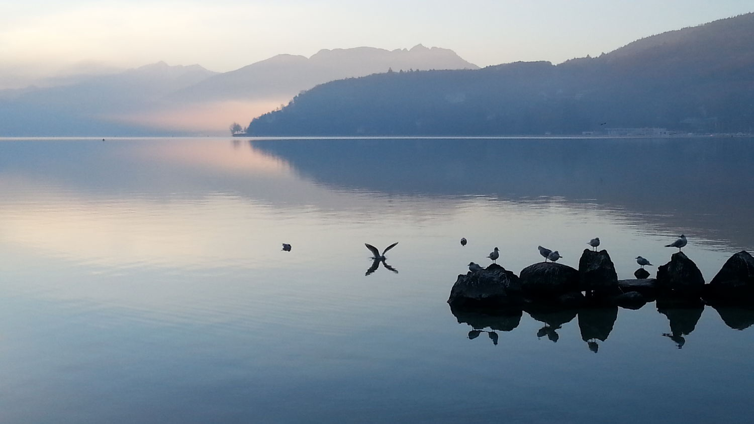 Landscape No Filter, No Edit, Just PhotographyTranquility Tranquility Reflection Lake Water Outdoors Blue No People Beauty In Nature Animal Themes Sunrise... Lake Annecy France  Seagulls At The Lake Seagull Serenity Early Morning Earlybird Quietness The Week On EyeEm