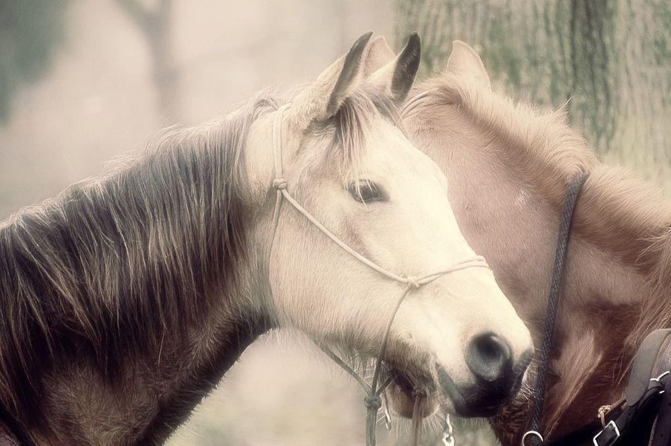 Lovely horses Horse Bestoftheday Bestshot EyeEm Best Edits Picoftheday Nikonphotography Edit Beautifulhorse EyeEm Best Shots Followme