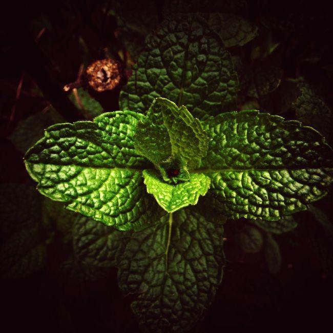 Green Mint Green