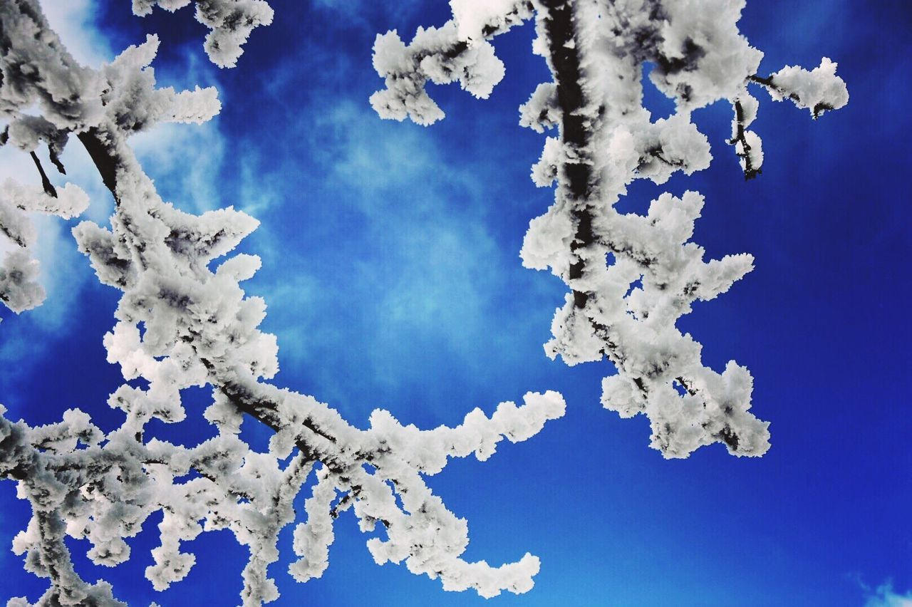Blue Sky White Color Winter Beauty In Nature Weather White Frost