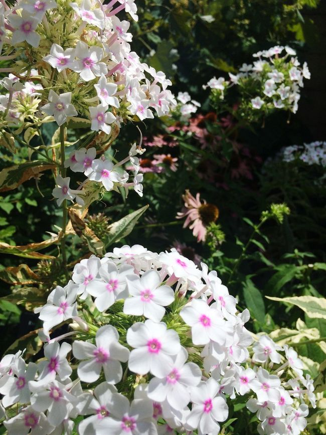 Picking Flowers  Planting Gardening Enjoying The Sun Hanging Out Beautiful Soaking Up The Sun Nature Natural Beauty