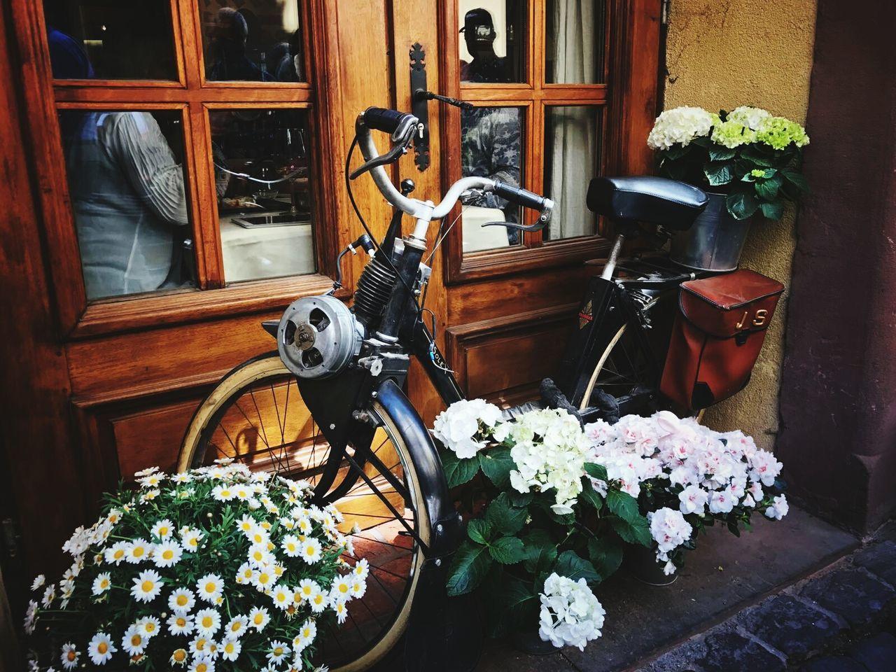 Flower Wood - Material Door Bike Bikesaroundtheworld City Travel Destinations Colmar, Alsace, France
