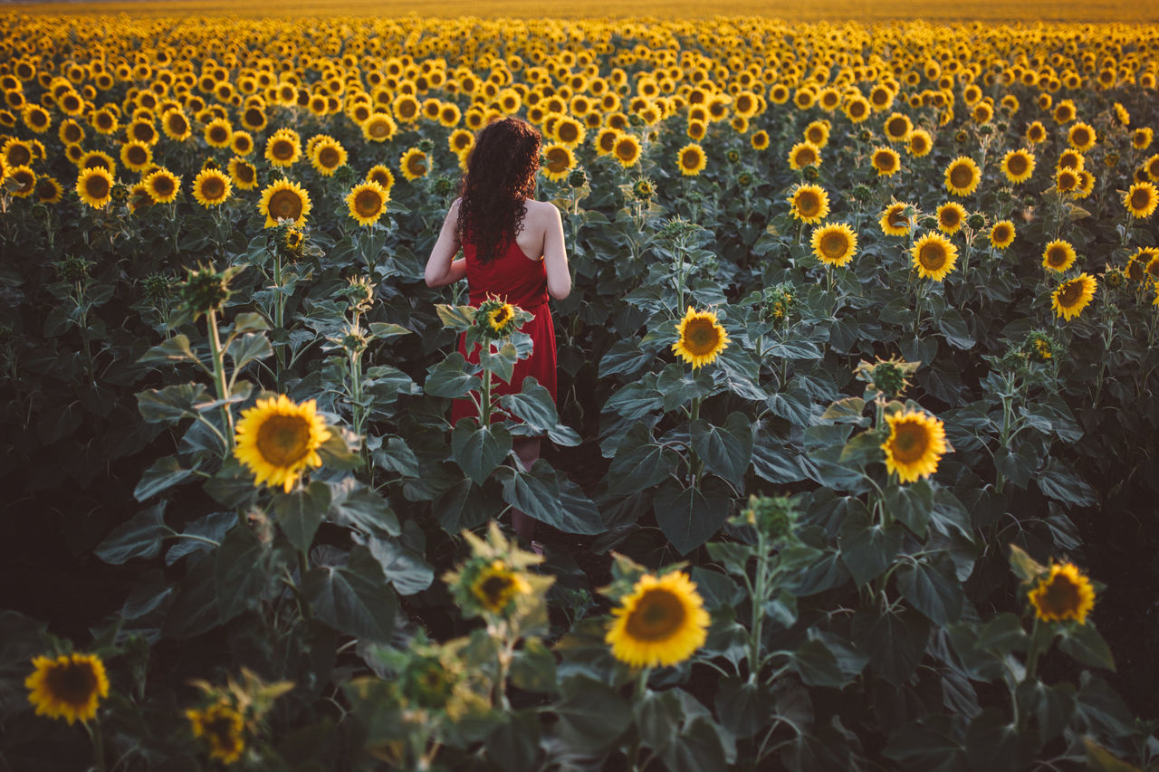 Beautiful Woman Field Flower Fragility Freshness Full Length Growth Leisure Activity Lifestyles Nature One Person One Woman Only Plant Real People Rear View Red Dress Sunflower Sunflower Sunflowers Sunflowers Field Sunflowers🌻 Sunflower🌻 Sunset Yellow Young Women The Photojournalist - 2017 EyeEm Awards The Great Outdoors - 2017 EyeEm Awards