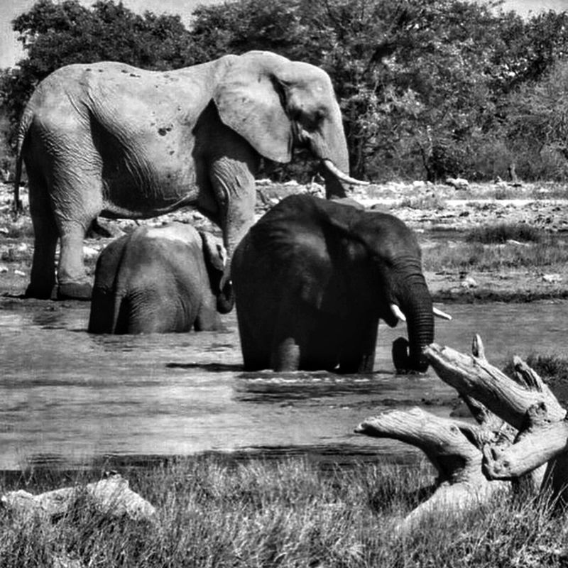 Namibia Wildlife Animals Elephant Etocha Africa Photographer Travel Safari Safari Animals Safari Park