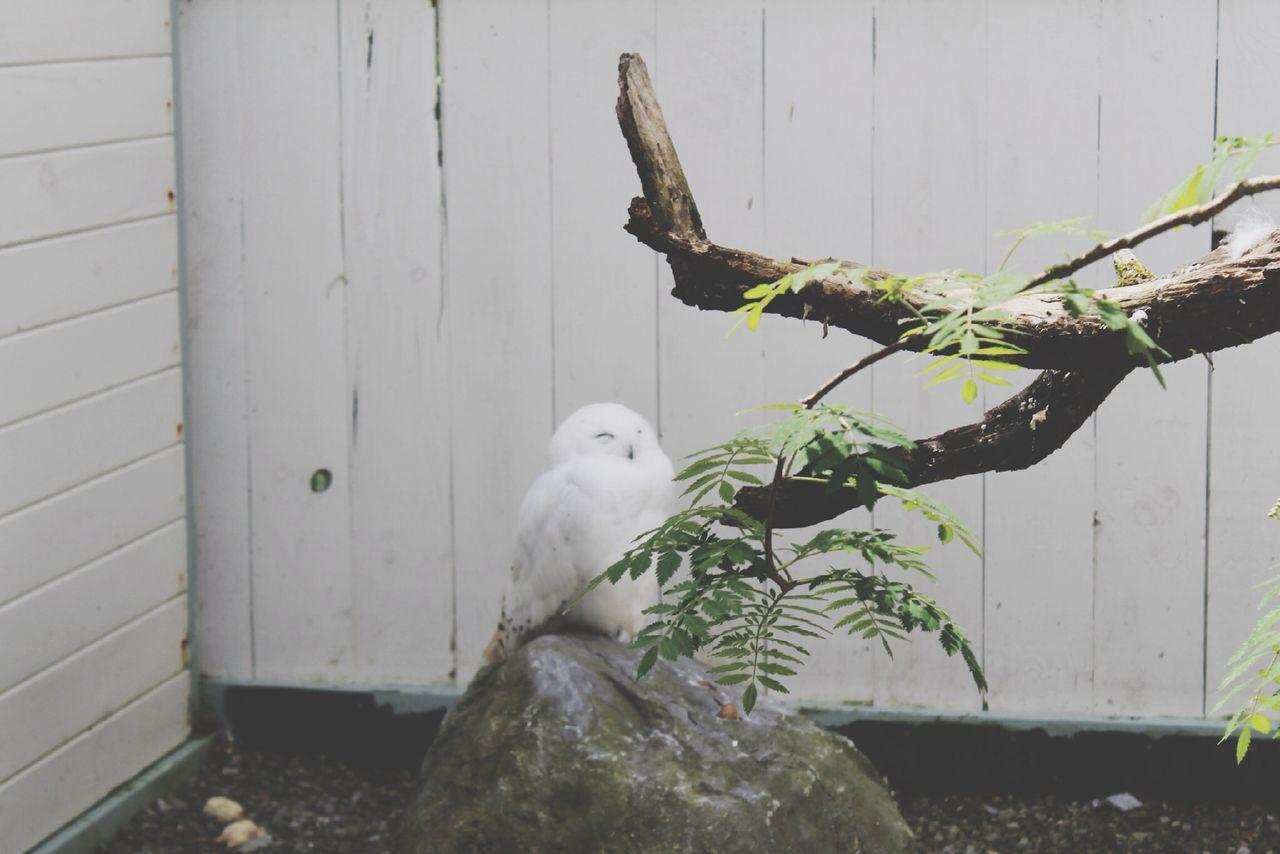 Beautiful stock photos of eule, Animal, Animal Themes, Avian, Bird