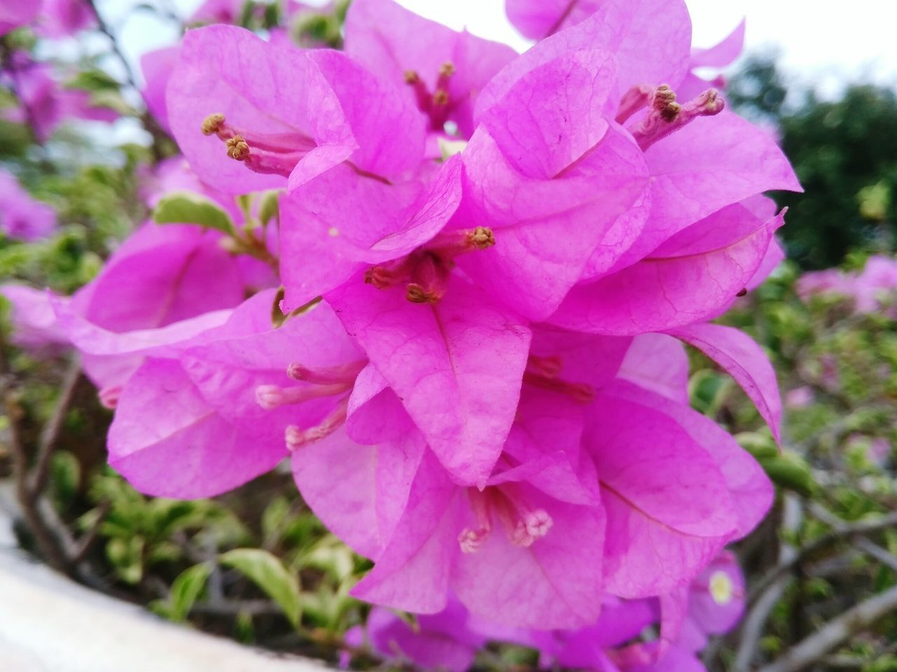 Flower Pink Color Nature Plant Beauty In Nature Close-up