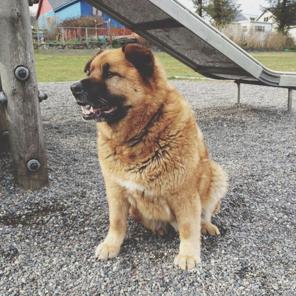 Smile Bear Rocking The Playground My Not So Puppy