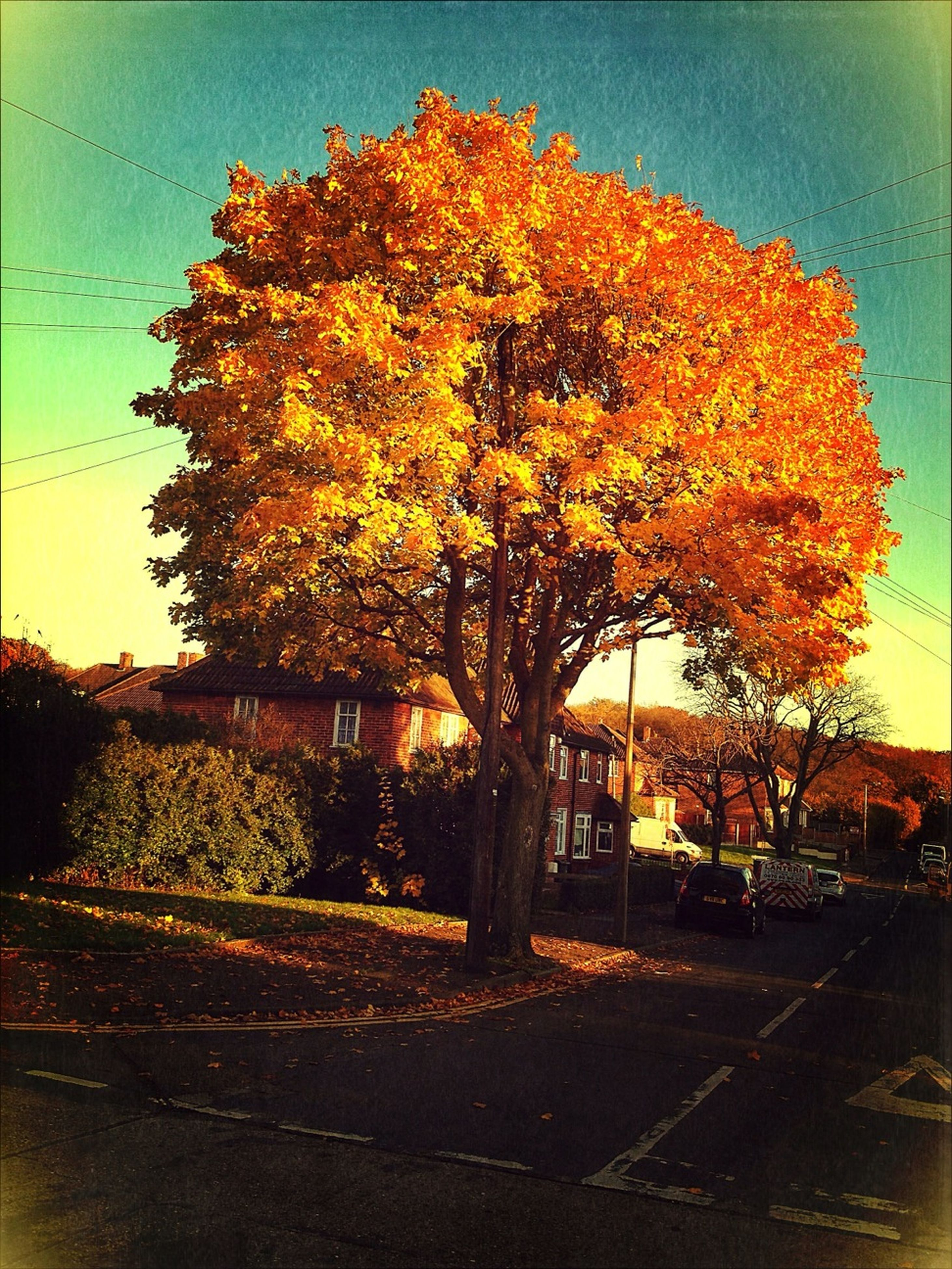 tree, autumn, change, orange color, built structure, architecture, building exterior, season, sky, sunset, nature, bare tree, branch, growth, yellow, house, outdoors, beauty in nature, tranquility, road