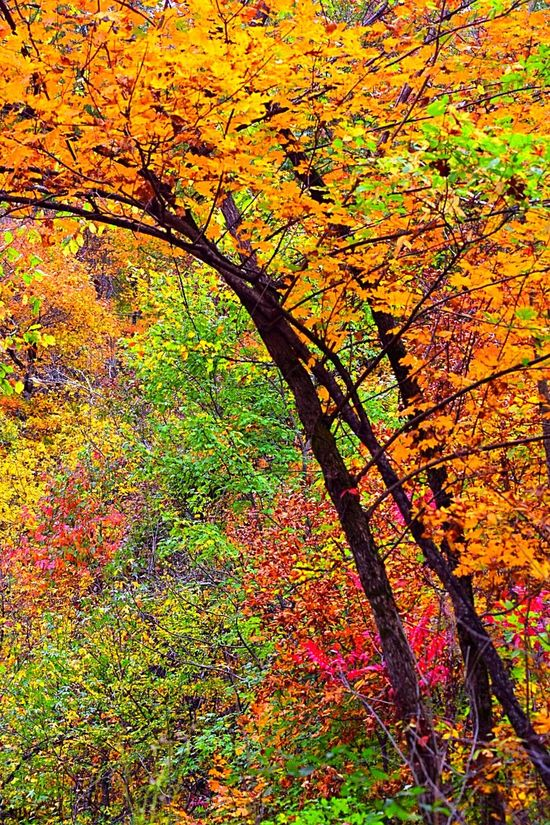 Color of Fall Outdoor Photography United States Nature Photography Fall Beauty Naturelovers Fun Photography Trees