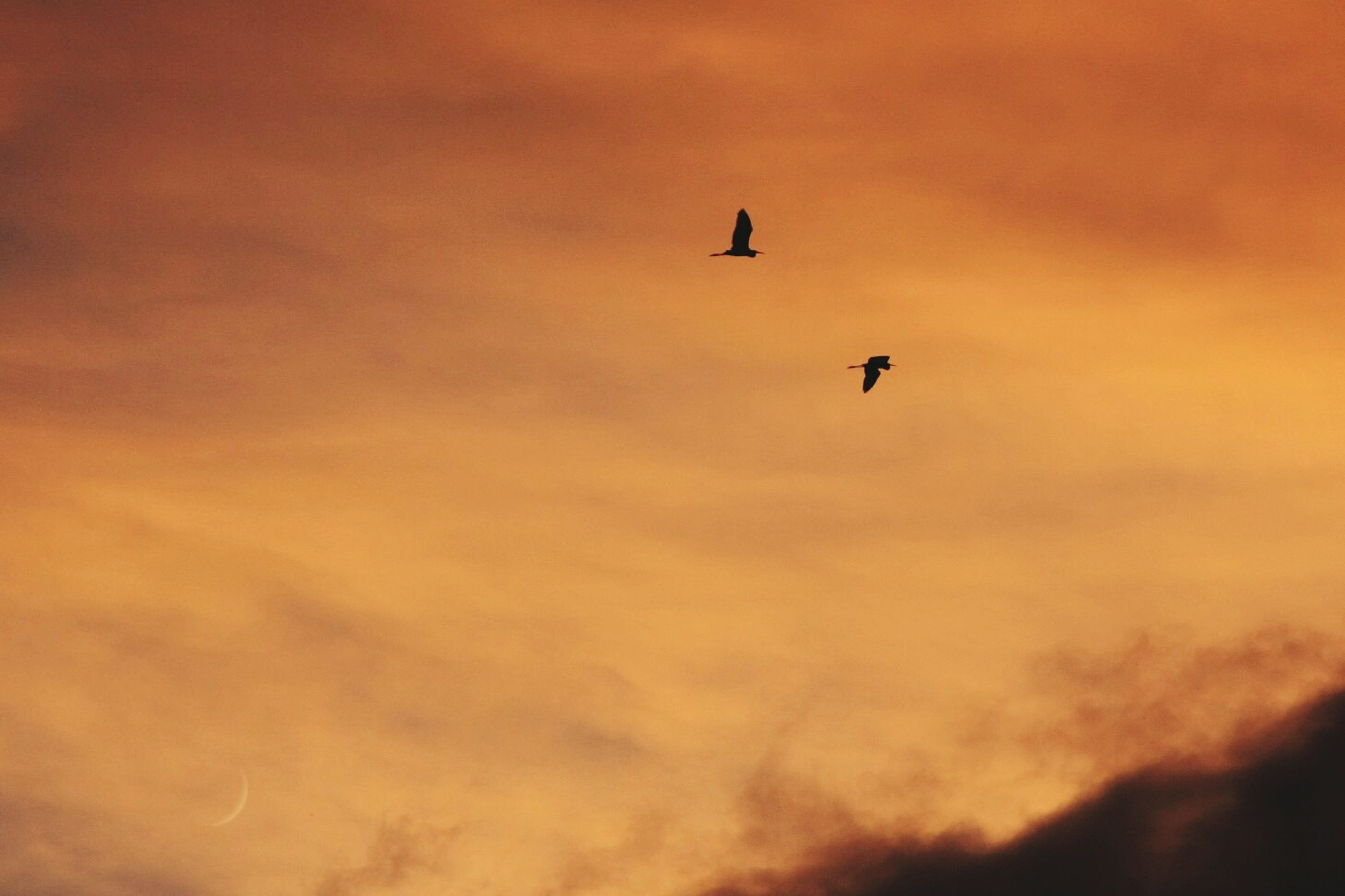 flying, bird, animal themes, sky, low angle view, animals in the wild, sunset, wildlife, cloud - sky, one animal, mid-air, beauty in nature, silhouette, nature, scenics, cloudy, tranquility, orange color, cloud, spread wings