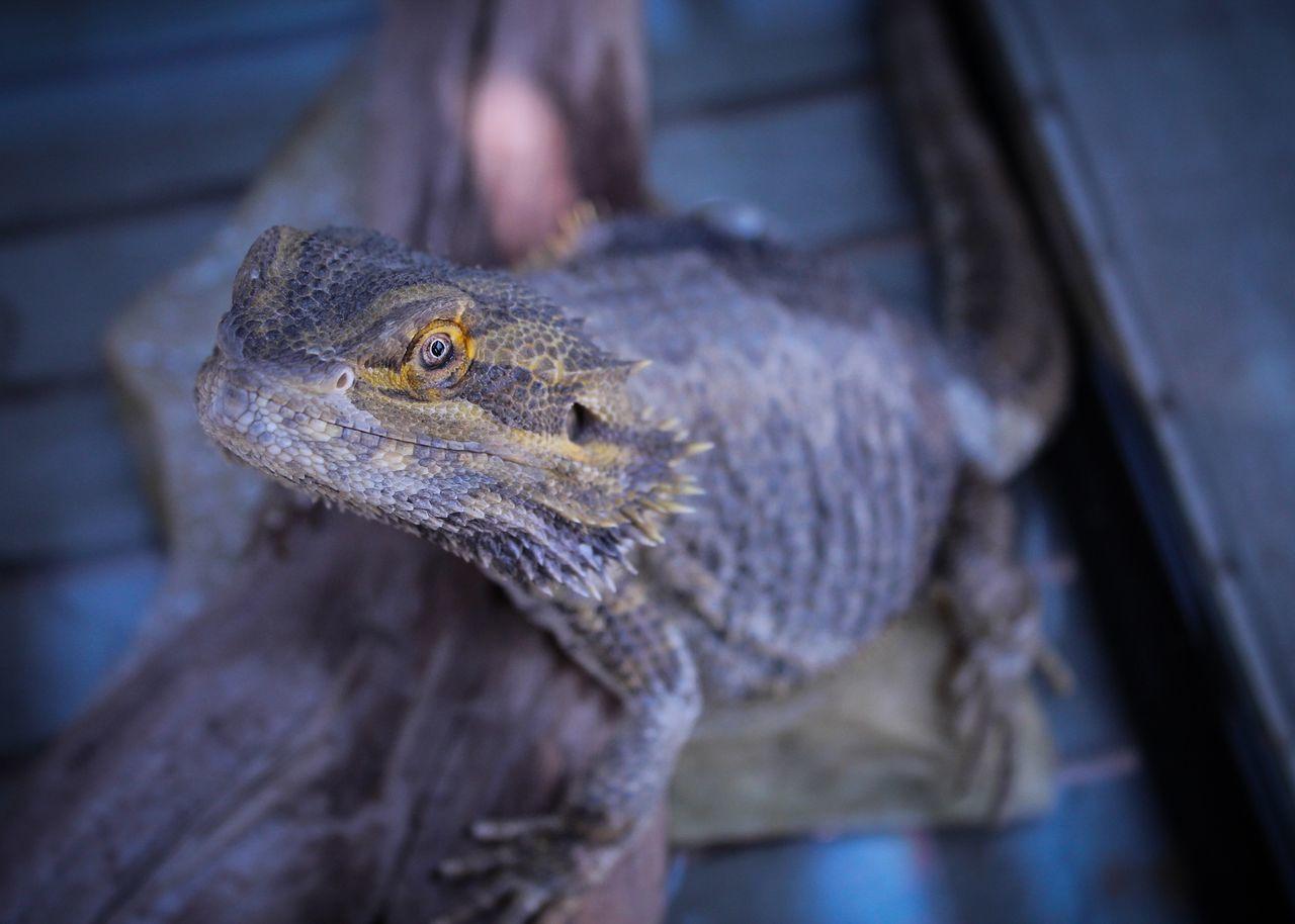 Dragonn Enjoying Life Makalah's Photos
