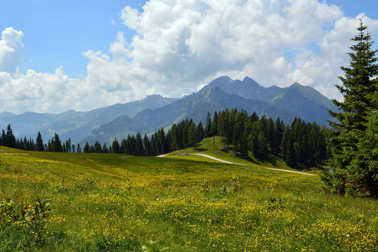 Austrian Alps in summer Alps Austria Austrian Alps Beauty In Nature Cloud - Sky Grass Grassland Green Color Hiking Landscape Landscape_Collection Landscape_photography Lush - Description Meadow Meadow Flowers Mountain Mountain Range Nature No People Outdoors Scenics Sky Summer Tranquility