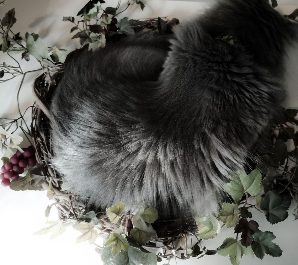 Furry Love Almost Black&white Animal Themes Art Everywhere Beauty In Nature Cats Of EyeEm Cats 🐱 Childhood Close-up Day Domestic Animals Eyes Closed  Flower Flower Head Fluffy Love Fragility Indoors  Mammal MUR B&W Nature One Animal One Person Pets Sleeping Spiral