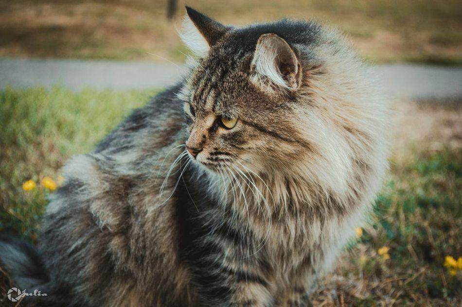 Cat Nikon D3200 Animals JReshetnyаk Photographer Streetphotography Азов 161 Hello World Photo