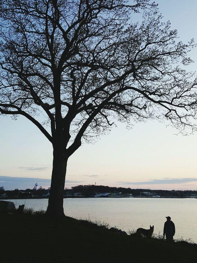 Taking Photos Dog German Shepherd Walking Around Trees
