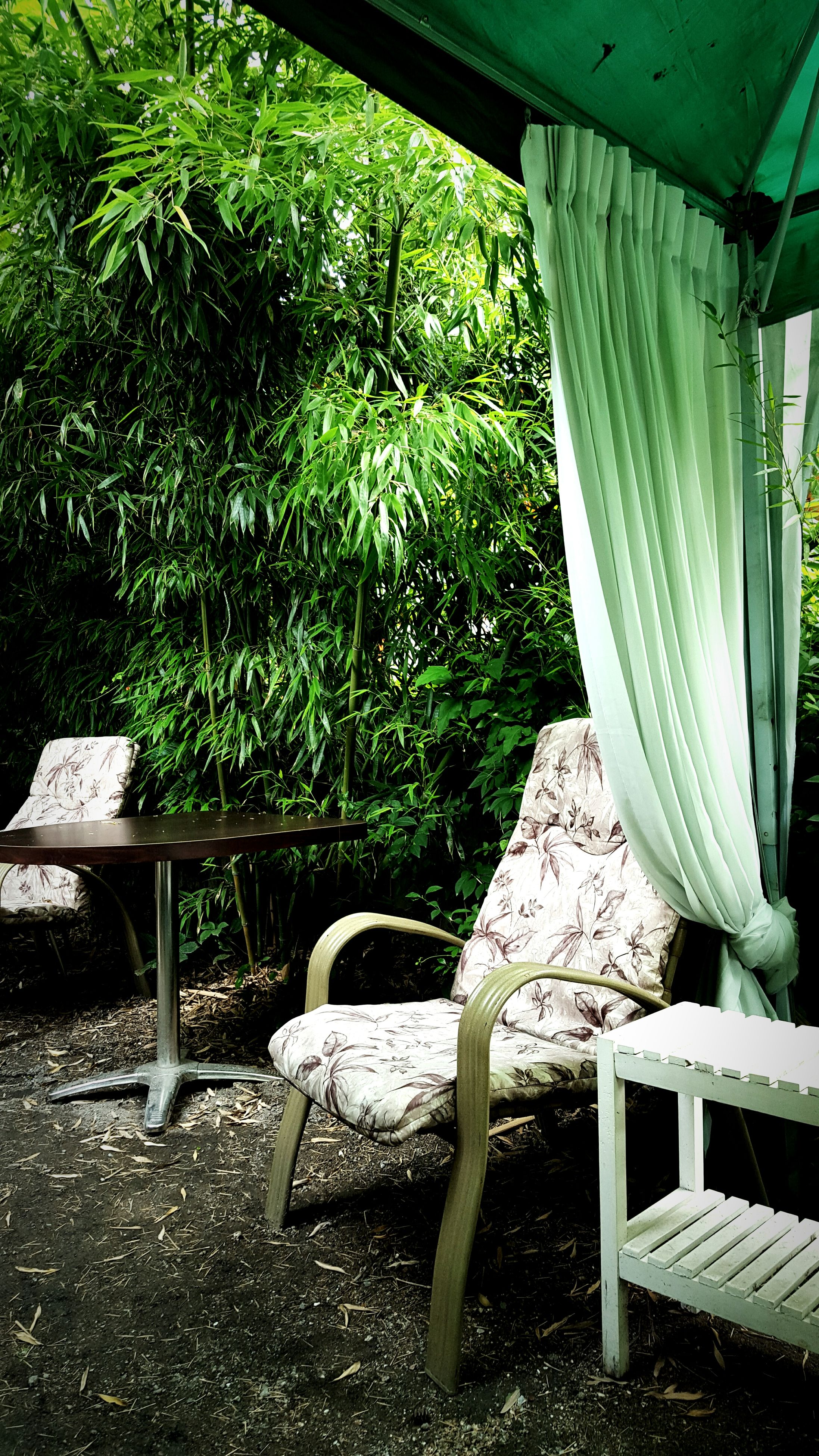chair, bench, absence, empty, seat, plant, growth, tree, front or back yard, leaf, abandoned, day, potted plant, sunlight, no people, green color, nature, wood - material, indoors, metal