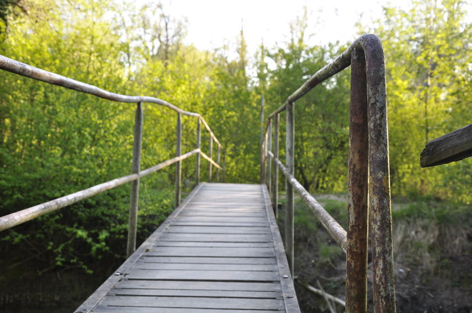 Bridge Discover  Hike Hikeing Nature Outdoors Railing The Secret Spaces Tree
