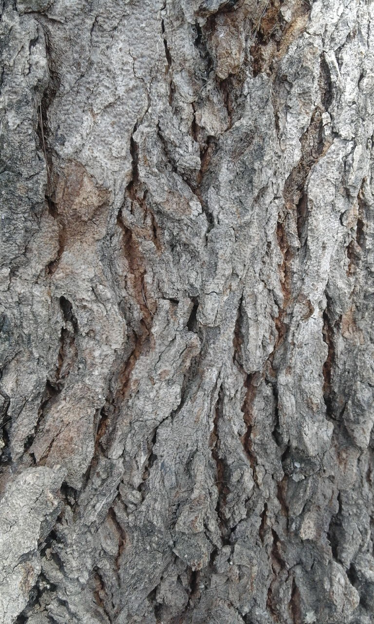 textured, rough, close-up, backgrounds, gray, rock - object, full frame, no people, tree trunk, nature, pattern, built structure, tree, day, outdoors