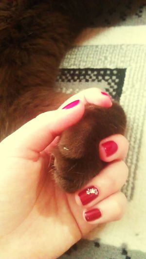 Естькотестьсчастье домашняя Cat♡ lovehim Misshim♥ happy becauseimhappy