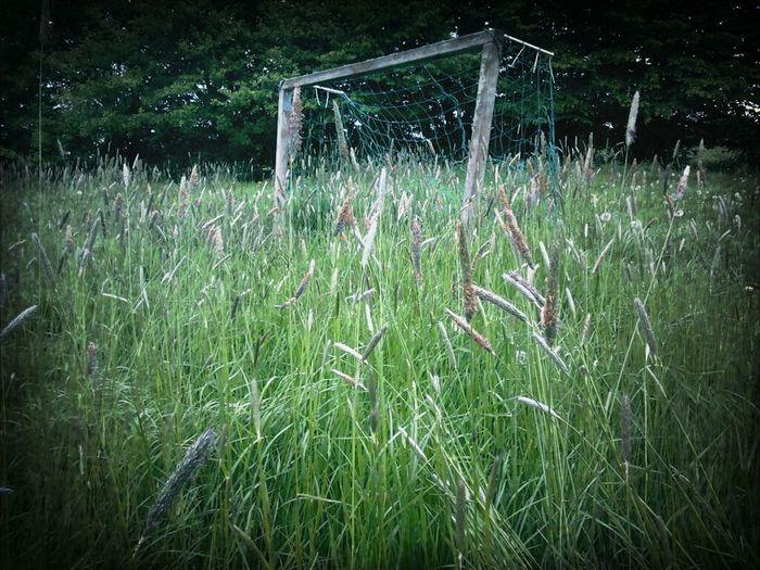 Garden Nature_collection