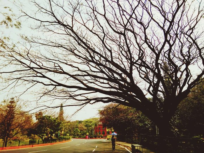 Tree Branch Nature Park - Man Made Space Growth Beauty In Nature Real People Outdoors Men Bare Tree Day Sky One Person Grass PeopleBBYOpaper The Great Outdoors - 2017 EyeEm Awards BYOPaper!