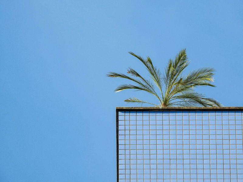 Rooftop Palms Blue Sky