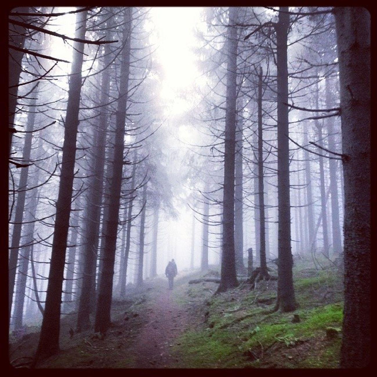Klausurtagung Kreativwanderung Masserberg Thuringen rennsteig werraquelle fehrenbach thüringerwald aproxima