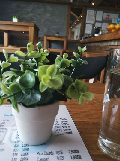 Indoors  Vase Plant Table Potted Plant Flower No People Close-up First Eyeem Photo Bosnia And Hercegovina EyeEmNewHere