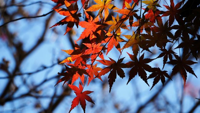 Autumn Leaves Autumn Colors 紅葉 紅葉を見に行こうよう Nature Nature Photography Photography