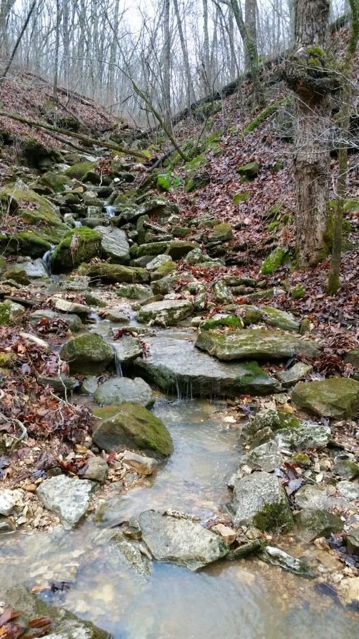 nature, forest, tranquility, stream, tree, tranquil scene, water, day, rock - object, outdoors, stream - flowing water, no people, beauty in nature, scenics, moss, branch