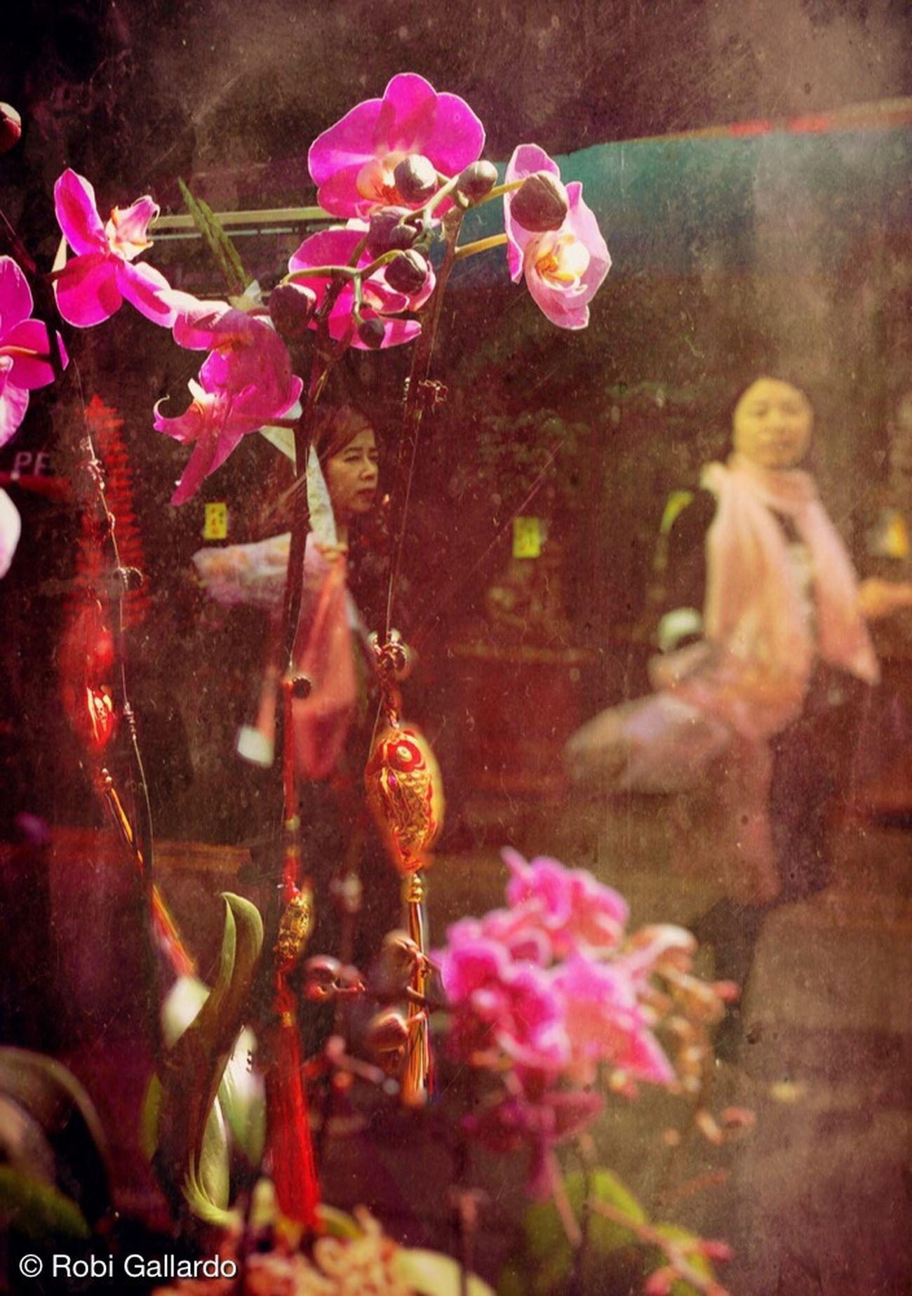 Chinese New Year flowers. Eyem Philippines Shootermag Streetphotography IPhoneography WeAreJuxt.com Theappwhisperer Iphone6plus Hong Kong NEM Submissions NEM Street NEM GoodKarma AMPt_community Chinese New Year