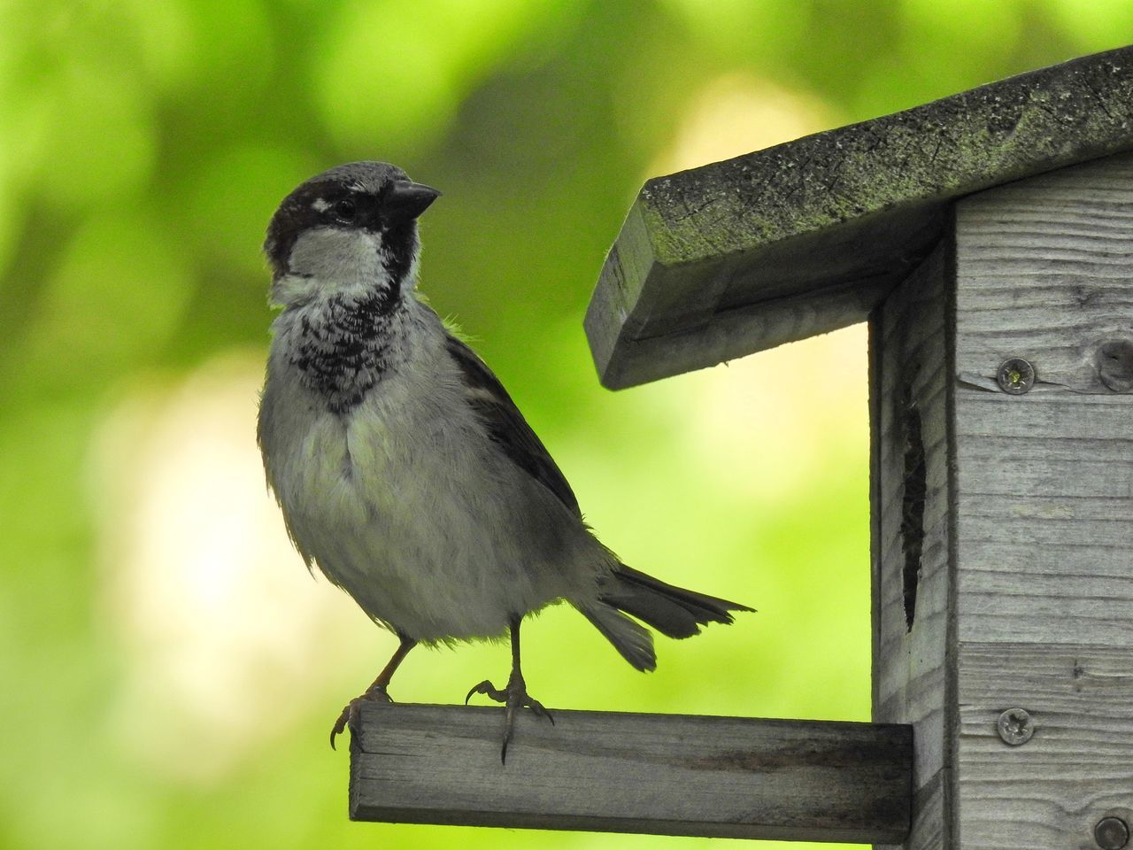 Alertness Animal Themes Animal Wildlife Animals In The Wild Bird Bird Photography Birds_collection Close-up Day Focus On Foreground Nature Nature Photography Nature_collection Naturelovers Nesting Place No People One Animal Outdoors Perching Sparrow Wood - Material