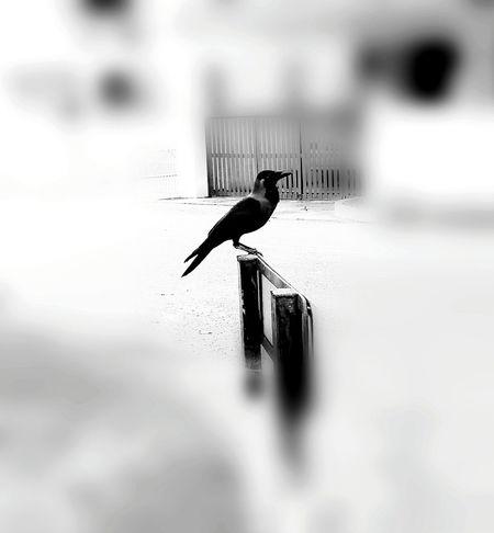 One Animal Bird Beauty In Nature