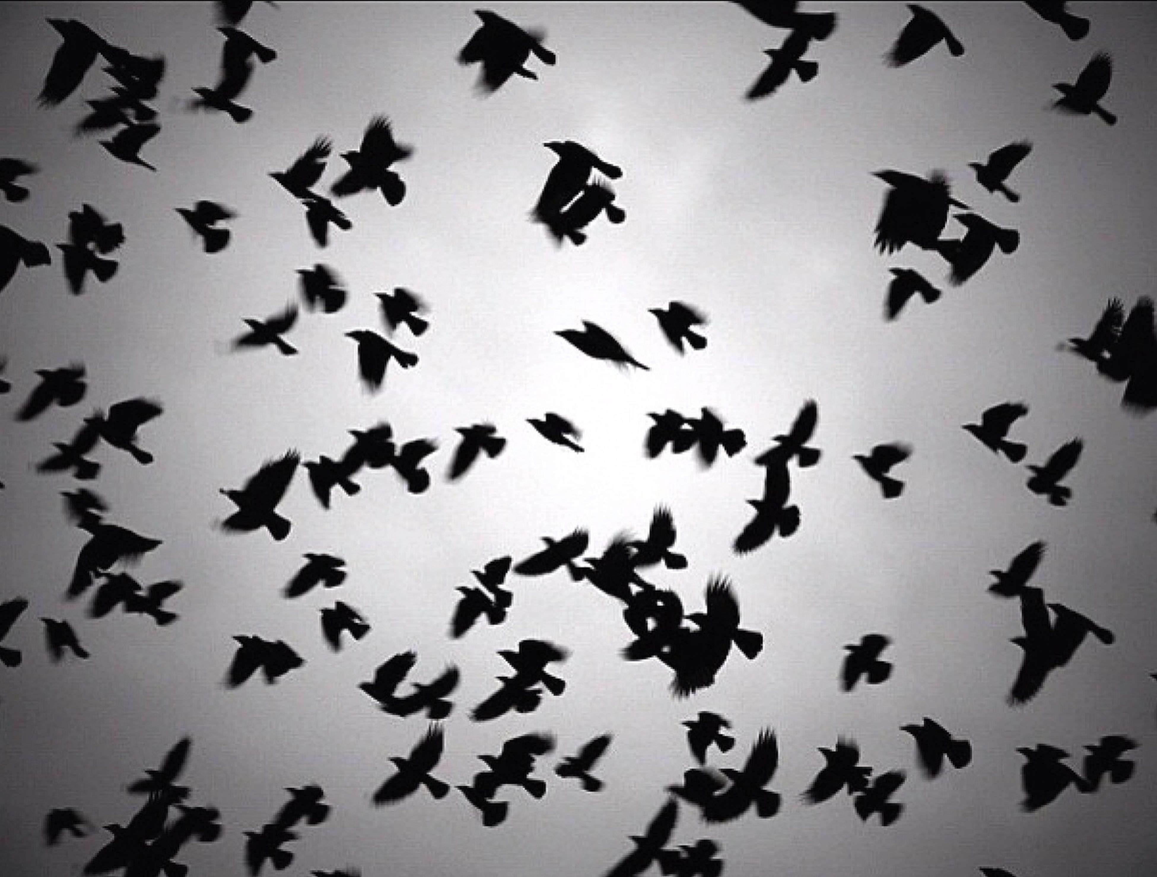 bird, low angle view, animals in the wild, animal themes, flying, flock of birds, wildlife, silhouette, backgrounds, full frame, sky, no people, outdoors, day, nature, spread wings, abundance, clear sky