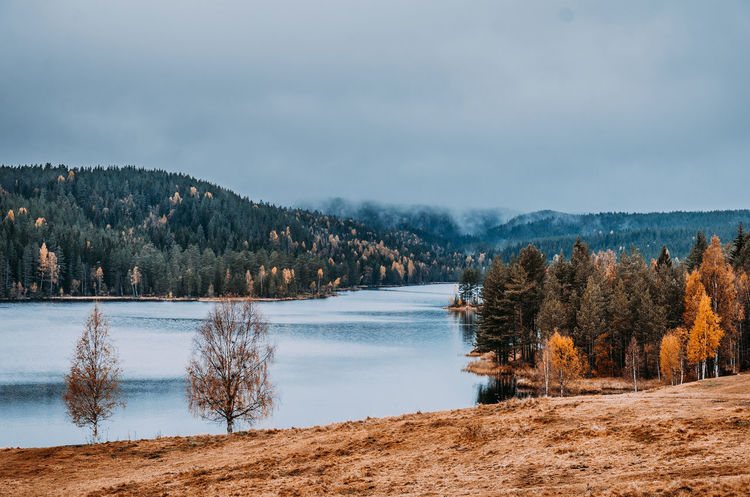 Beauty In Nature Cold Temperature Day Forest Lake Landscape Nature No People Outdoors Pinaceae Pine Tree Pine Woodland Scenics Snow Tree Water Wilderness