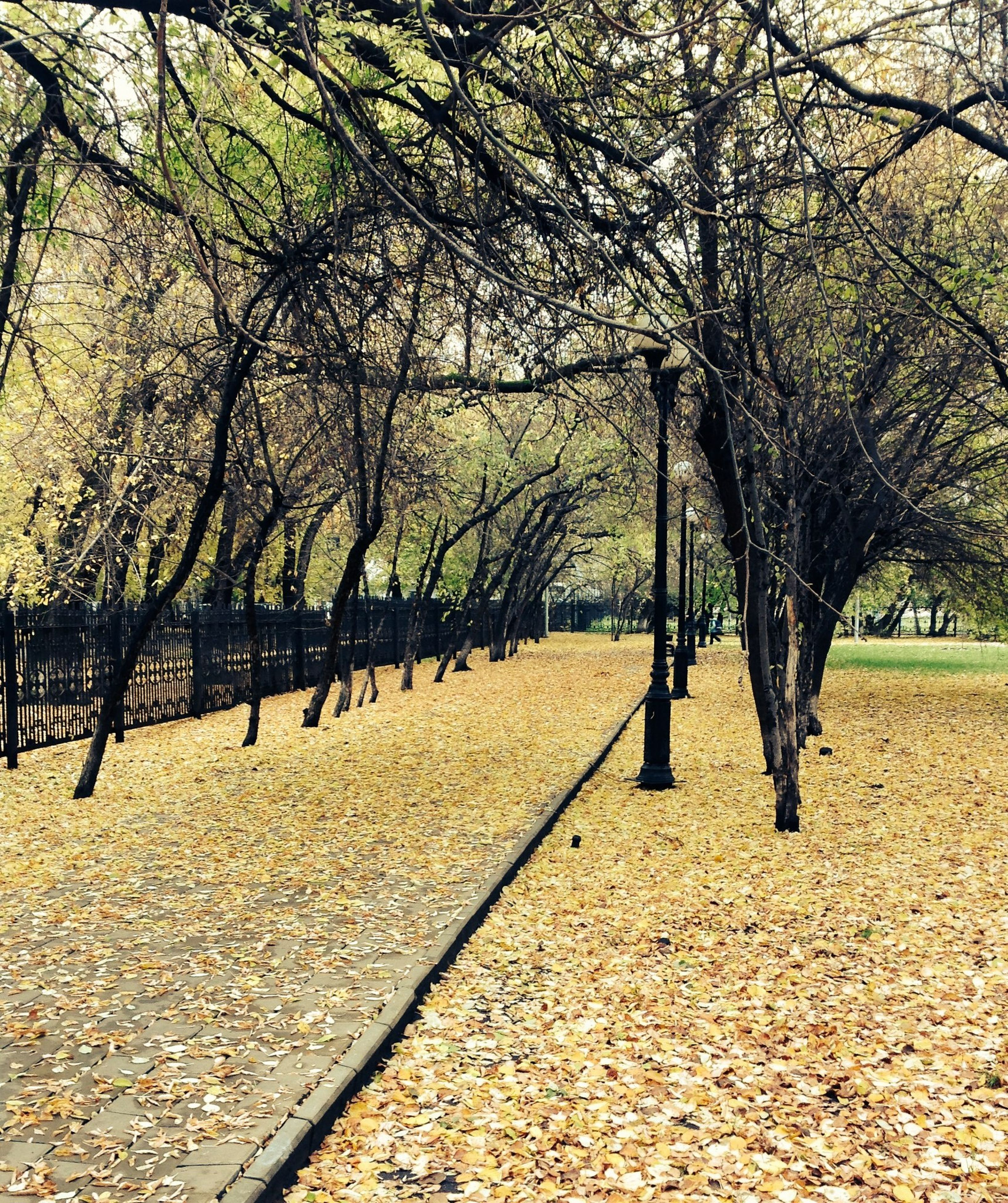 tree, autumn, the way forward, tranquility, treelined, nature, change, tranquil scene, diminishing perspective, park - man made space, tree trunk, branch, footpath, beauty in nature, bare tree, growth, day, landscape, in a row, season
