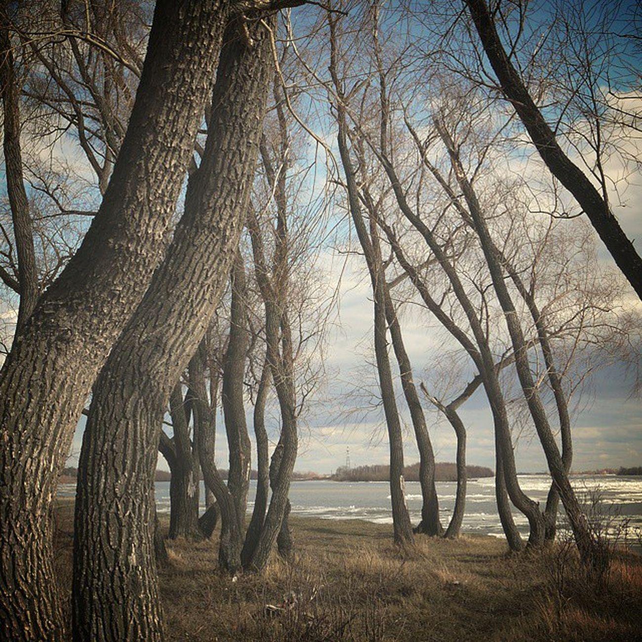 Omsk Siberia Debacle Spring April Tree Panasonic_g3 омск сибирь весна ледоход апрель  панасоник