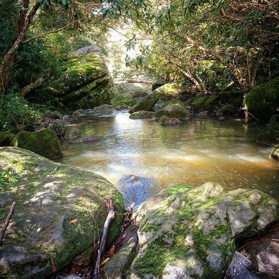 """Loving the mossy rocks in Lane Cove National Park. Wish there were more """"tropical"""" parks here in Sydney! Sydneysights Lanecove Nature"""