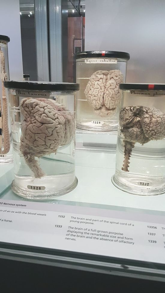 Science Natural History Museums Museum Test Tube Laboratory Close-up Science Brain Brains