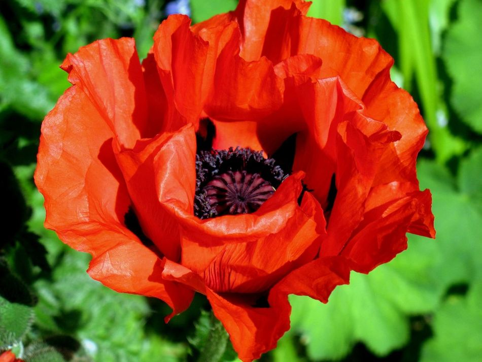Remembrance Poppy Remember Thankful Remembranceday Remembrancepoppy Lest We Forget Lestweforget