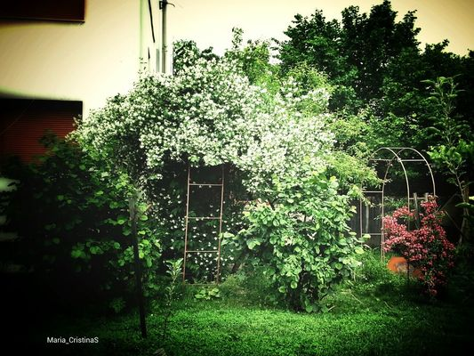 EyeEm Nature Lover in Cluj-Napoca by Sophia Savu