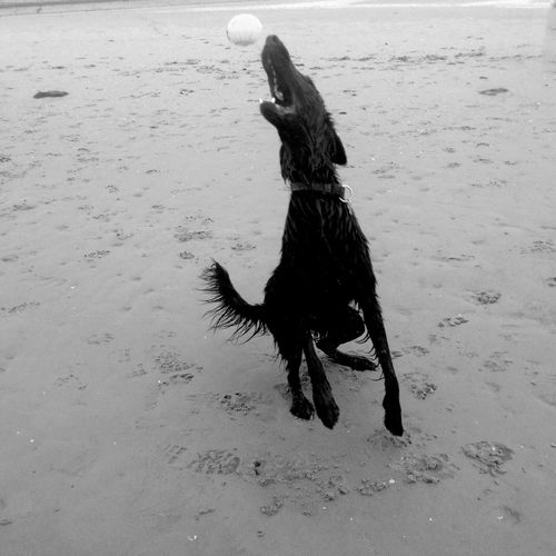 One Animal Animal Themes Sand Outdoors Dog Dogslife Doglover Dog Playing Oosterschelde Nature Beach Water No People Day Mammal