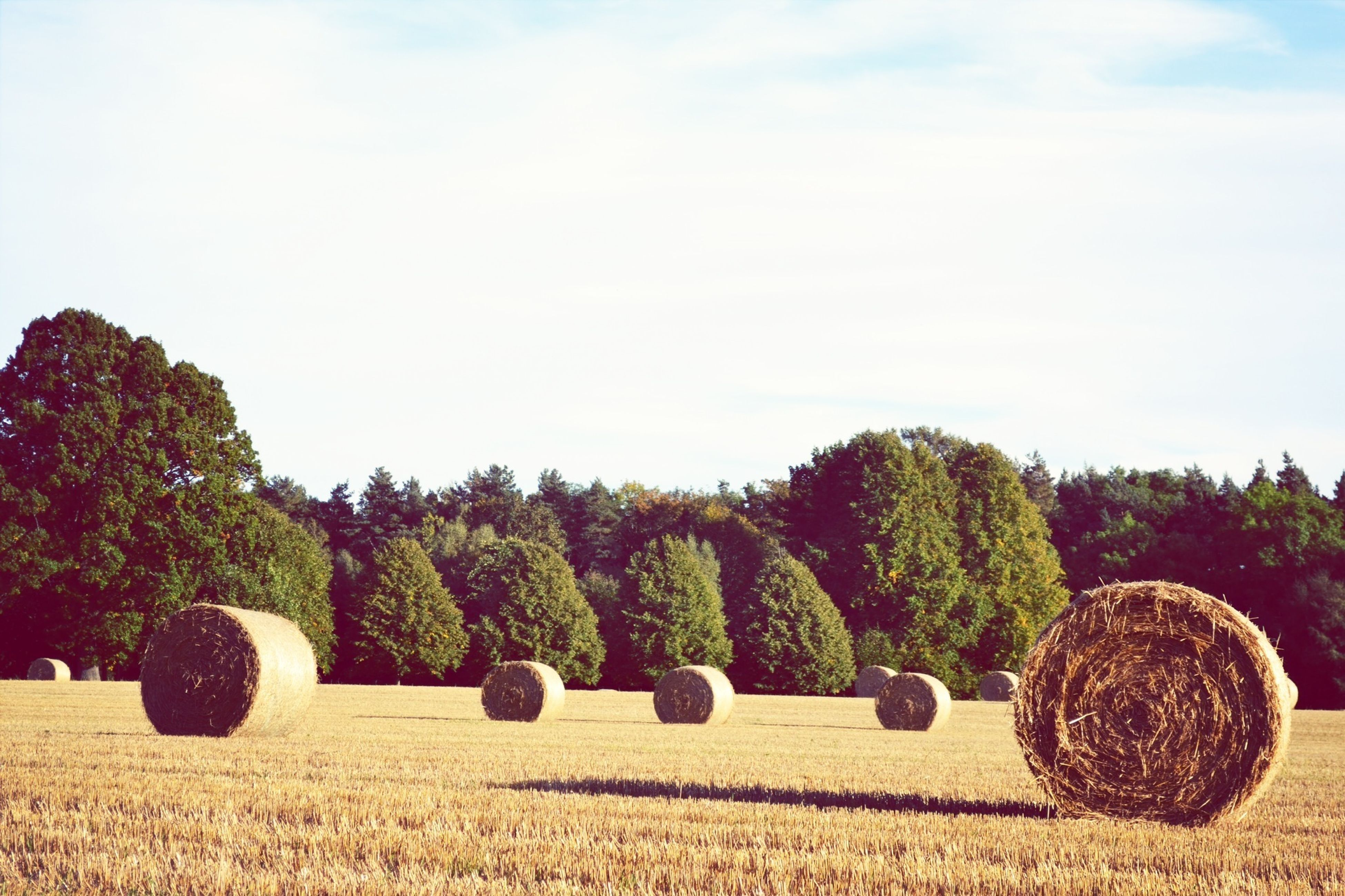 agriculture, field, rural scene, bale, farm, landscape, hay, harvesting, crop, sky, tranquil scene, tree, tranquility, nature, growth, cultivated land, rolled up, grass, scenics, beauty in nature