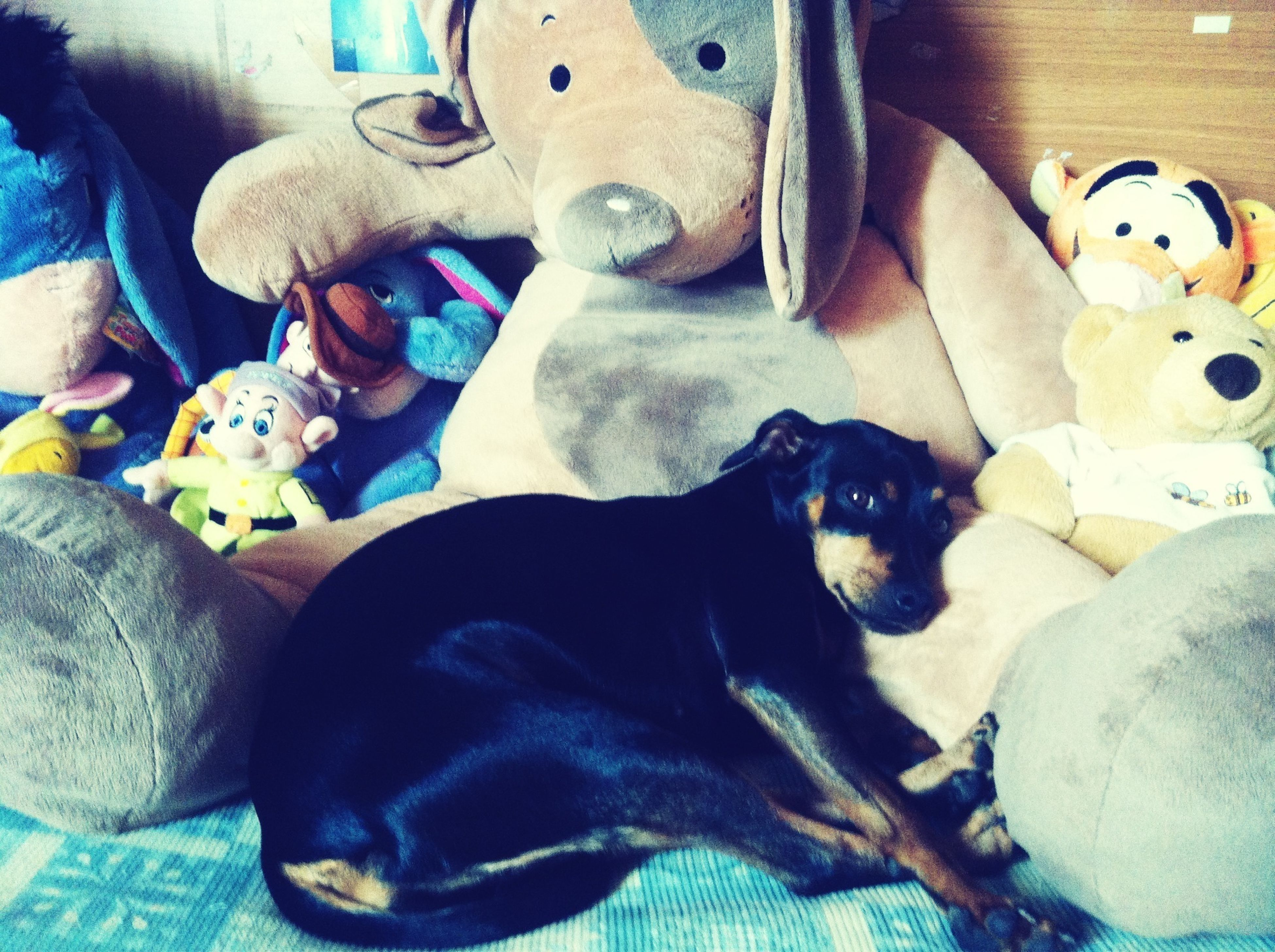 indoors, domestic animals, pets, animal themes, mammal, dog, toy, relaxation, high angle view, one animal, sofa, stuffed toy, animal representation, sitting, home interior, no people, close-up, lying down, bed, variation